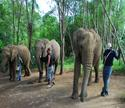elephant sanctuary 1